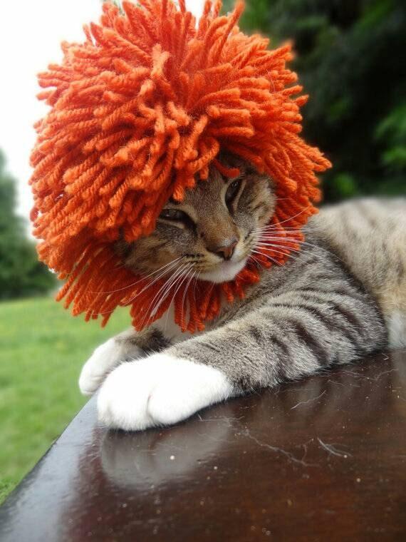Lion Mane Pattern Lions Mane Crochet Pattern Lions Mane Cat Etsy