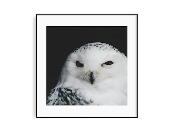 Eule Photo Print Tiere Vogel Fotografie Poster Wald Etsy