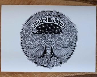 New Zealand Puriri Moth 2018 A3 Print - Giclee Limited Edition