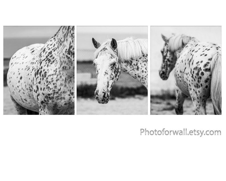 Horse art decor gallery wall art set of 3 Black and white set of 3 8x10 inches