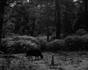 Yak in the bush.......2007