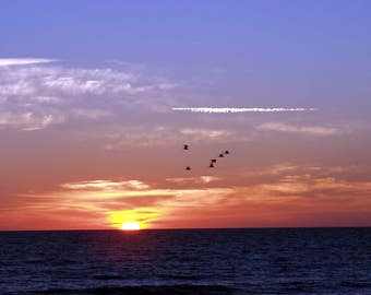 Flying South at Sunrise.....hutchinson island, fl 2001