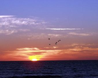 Flying South at Sunrise.....hutchinson island, fl 2001