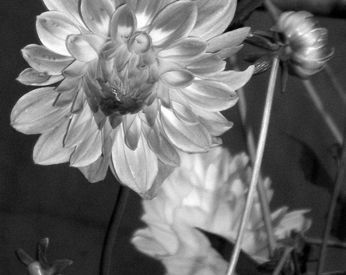 Picturesque Flower l, Lachung, 2007