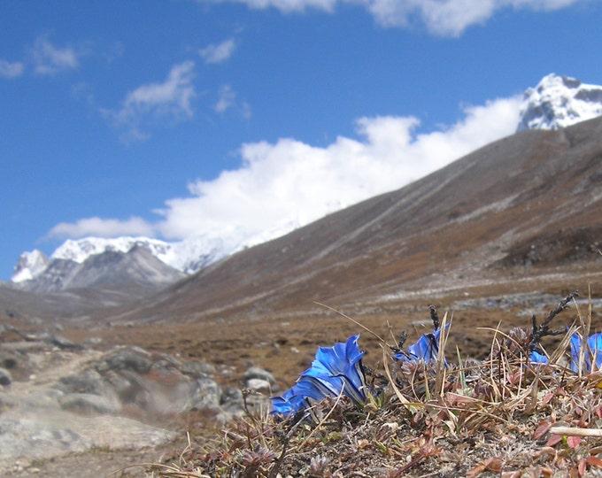 Yumesamdong Zero Point ll, Chungtang District, N. Sikkim 2007