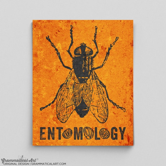 Forensics Gifts Entomology Poster Forensic Science Poster Life Etsy