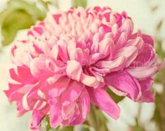 Flower Photography - Dahlia Photo -  Pink Flower Photo - Flora Decor - Shabby Chic Home Decor - Cute Flower Photography - Nature Photography