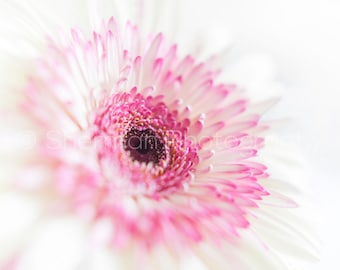Flower Photography - Pink Flower Print - Nature Photography - Pretty White and Pink Decor - White Flower - Flower Home Decor - Dreamy Photo