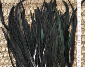 """Natural black coque feathers 15-18"""" length"""
