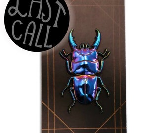 3D figure book Real figure Box stag Beetle stag beetle