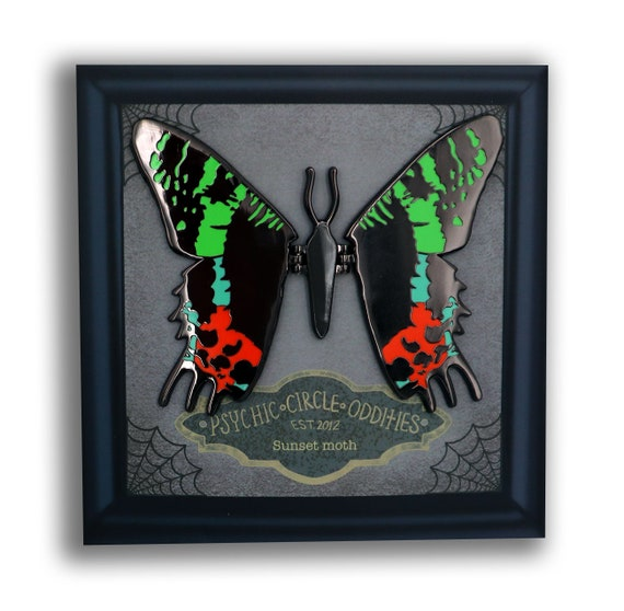 Sunset moth moving wing enamel pin!