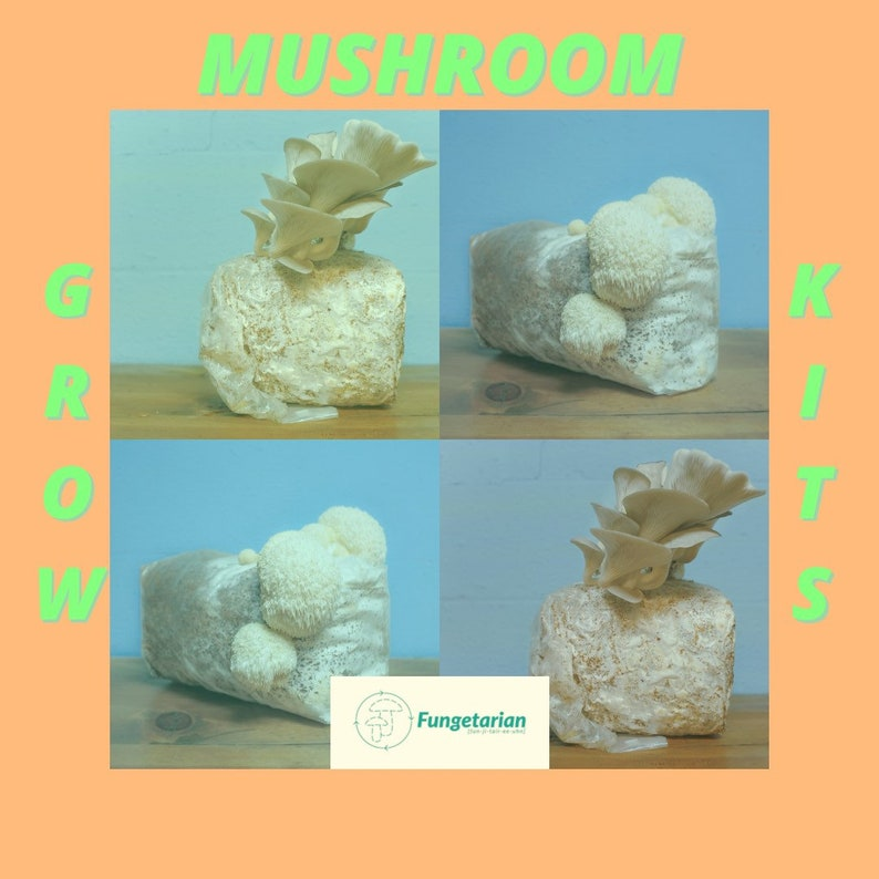 Mushroom Grow Kit  Grow Your Own Mushrooms  Oyster Or Lions image 0