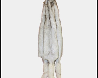 bdfa62884b9 Glacier Wear Polish Blue Fox Fur Pelt Hide Select Quality