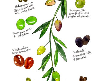 Olives Watercolor Art Print / Kitchen Illustration of the Types of Olives 9x12 by Marcella Kriebel