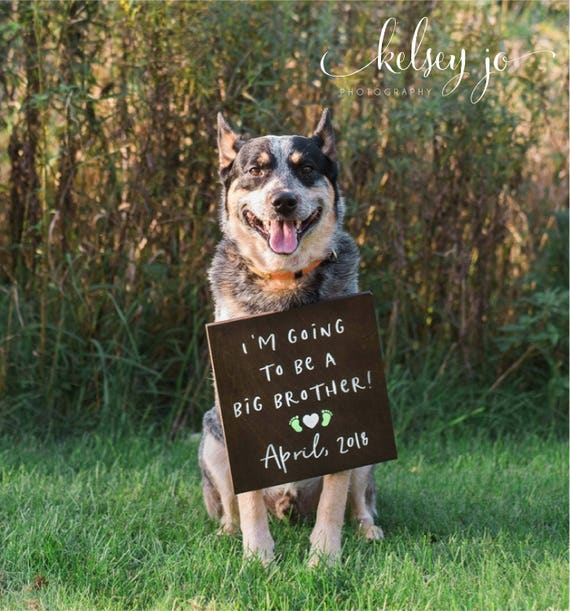 dog baby announcements