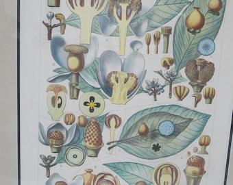 Antique L PIERRE & E DELPY Hand Colored Framed BOTANICAL Print Plate 78