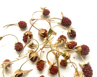 Dried wild strawberries - dried strawberries for crafts - Crafts supplier red dried wild strawberry berry - strawberry set for resin jewelry