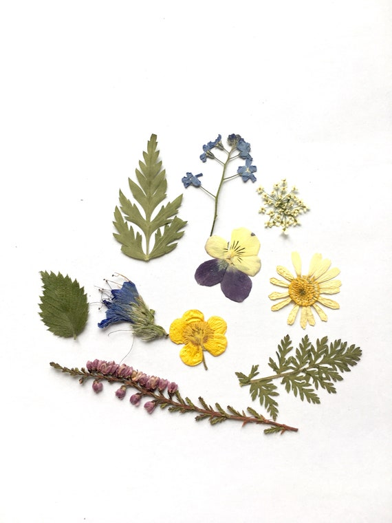 Real Pressed Dried Flower For Art Craft Resin Pendant Jewellery Making Supply