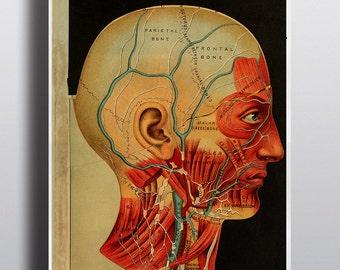 Items Similar To Antique Anatomy Print 1800s Vintage Human