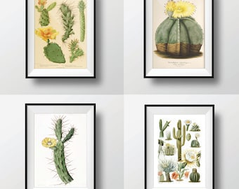 Antique Cactus Print Set of 4 11x14 Botanical Print Set Wall Decor Art Print Illustration Wall Art Cacti Succulent Nature