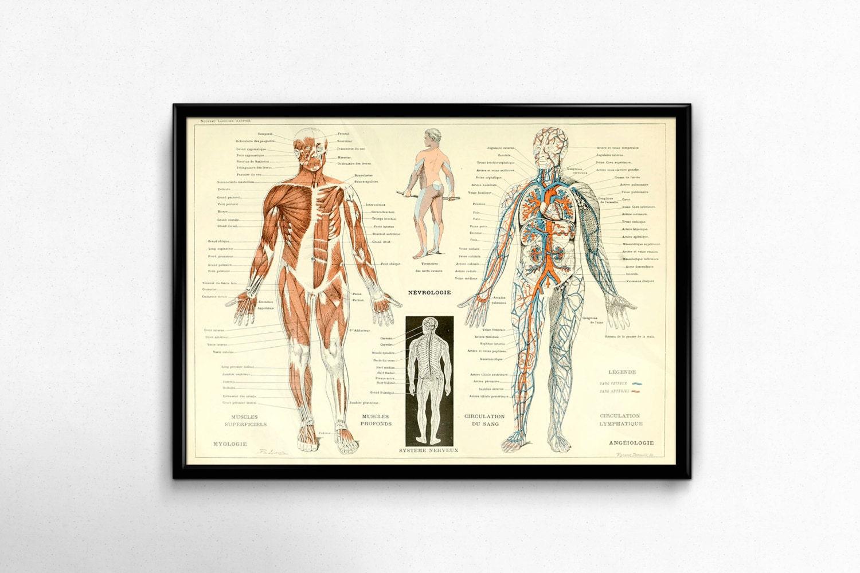 Anatomía antigua impresión de 1800 cuerpo humano Vintage | Etsy