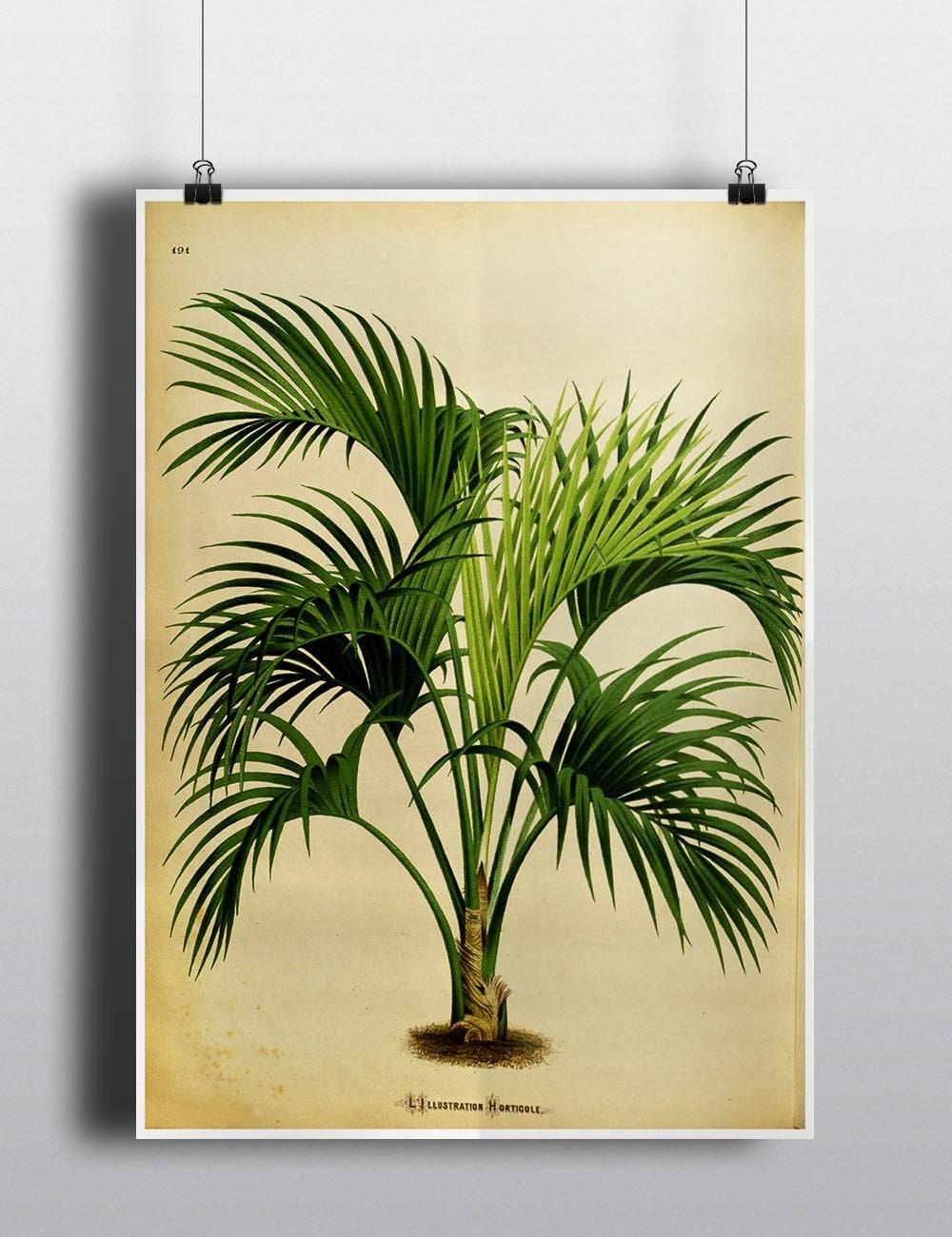 Antique 1800s Palm Tree Print Botanical Print Art Print Wall | Etsy