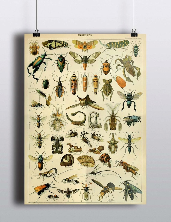 Antique Insects Science Chart Natural Science Bugs Wall Decor
