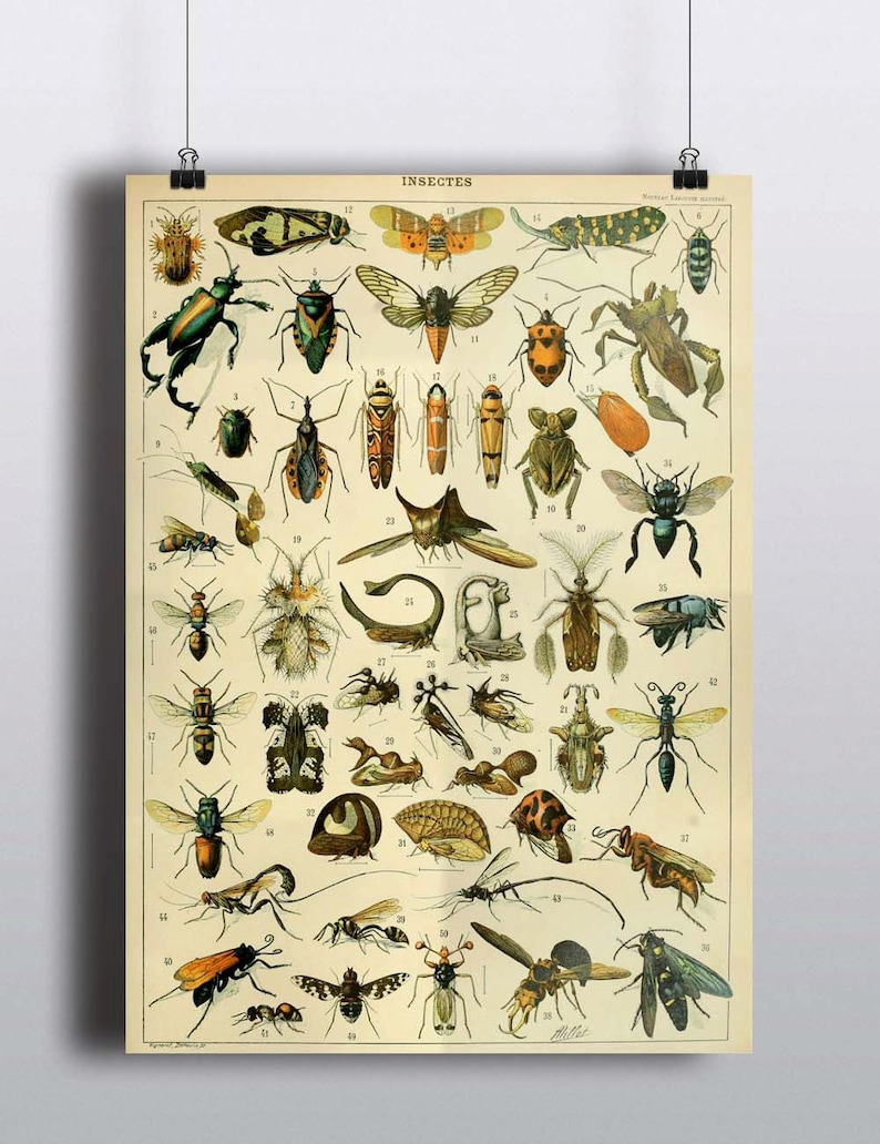 Antique Insects Science Chart Natural Science Bugs Wall Decor image 0