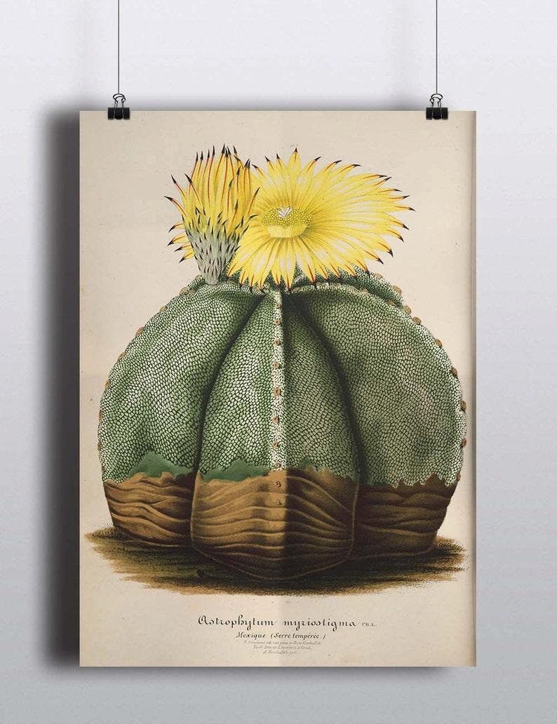 Antique 1800s Cactus Poster Art Print Illustration Cacti image 0