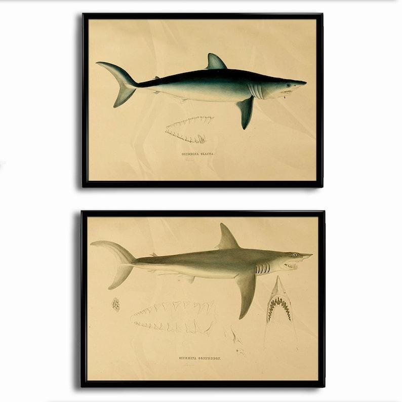 Antique 1800s Shark Print Poster Shark Decor Art Print Vintage image 0
