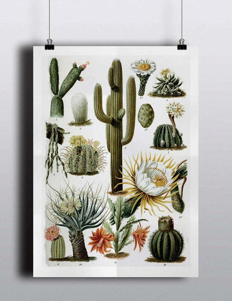 Antique 1800s Cactus Chart Poster Art Print Illustration image 0