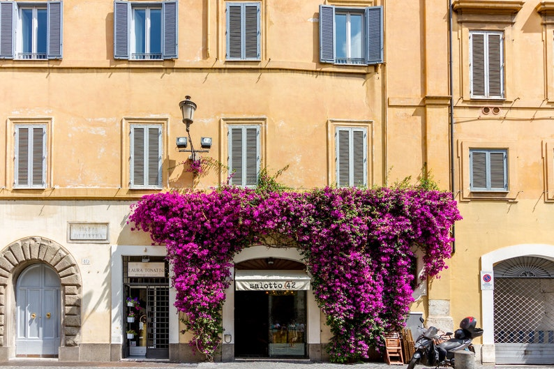 Rome Italy door Falling Off Bicycles bougainvillea flower image 0