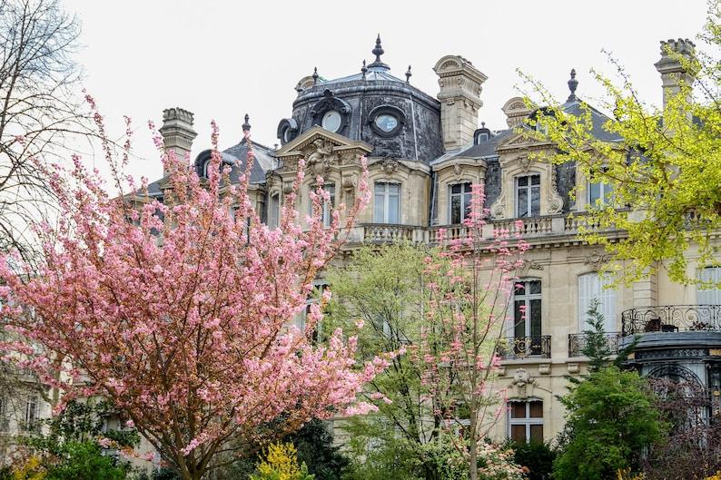 Paris flower photo spring photography cherry blossoms fine image 0