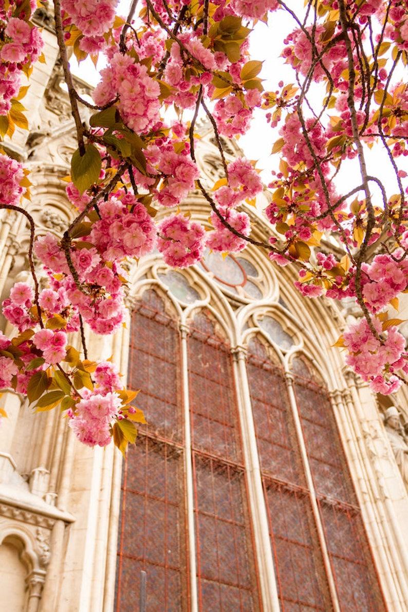 Paris flower photo spring photography cherry blossoms Notre image 0