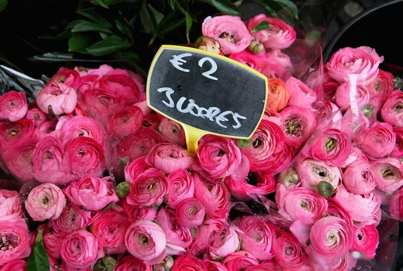 Flower photo pink Ranunculus photo pink Valentine flowers image 0