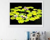 Downloadable Printable Fine Art Photograph WaterLilies