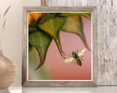 Bee Nectar Honey Lovers Art, Sunflower petals, Sweet natural food, Porch Wall Art, Spring Summer Plant, Wasp in agriculture