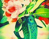 Green Carp and Native Rhododendron