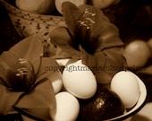 Sepia Kitchen Autumn Still Life of Amaryllis/Eggs/Avocado in Colander