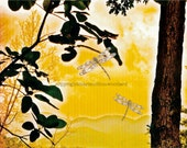 Summer Solstice Landscape Yellow Mountain and Dragonflies#savethepollinators