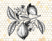 Toile Wall Art, Antique Fruit Design, Vintage Flowers, Honeycomb Decor, Ampersand Image, Square Wall Art, Vintage Bee Prints,