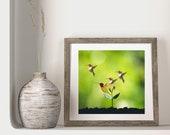 Hummingbird Porch Decor, Downloadable Print, Youth Wall Art, Whimsical Bird Art, Homeschooling Art, Summer Garden, Pollinators Art