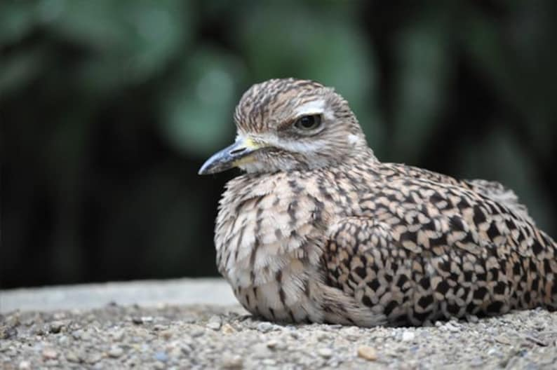 Resting Bird Photo, Brown and white, fine photography prints, Annoyed Yet  Comfortable