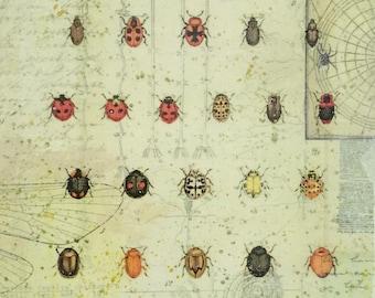 Vintage Entomology Chart Mixed Media Painting, bugs, beetles, insect art, collage, vintage illustrations, science art, biology, original art