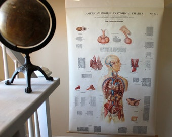 Vintage Pull Down Medicine Chart - The Endocrine Glands - A.J. Nystrom & Co. - Circa 1940s - Medical Curiosity - Room Decor - Wall Covering
