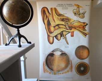 Pull Down Medical Chart - Anatomy of Eye and Ear - A.J. Nystrom & Co. - Retractable Wall Hanging - Unique Anatomy Display