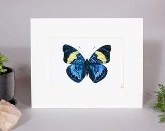 ARTWORK Prola Beauty Butterfly Framed Painting, Framed Blue Butterfly Art, Mounted Prola Beauty Butterfly Painting