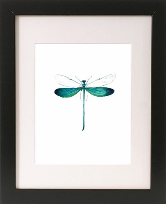 Damselfly Mounted Insect Framed Insect Framed Specimen | Etsy
