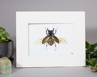 Atlas Beetle Painting, Insect painting, Mounted Beetle Art, Framed Watercolor, Bug Art
