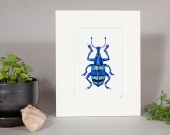 Eupholus Weevil Painting, Framed Eupholus Weevil Print, Weevil Painting